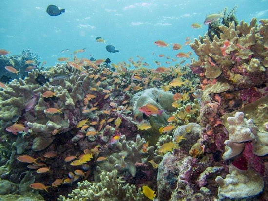 Marine life and living around corals in Mabul Island