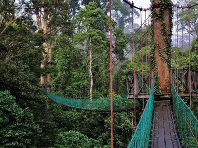 Nature canopy walkway in Danum Valley