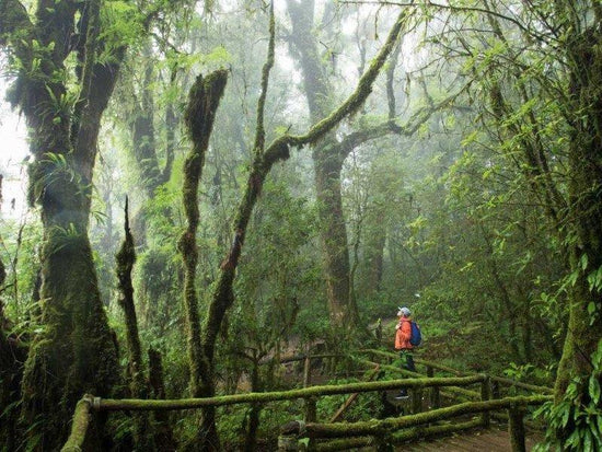 Tourist exploring the Doi Inthanon National Park