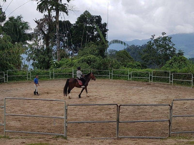 Trainer assisting visitors on horse riding in Bukit Tinggi