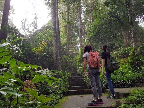 Trekking inside the jungle on Bukit Tinggi