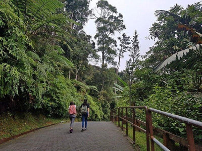 Walking on the paths in Bukit Tinggi