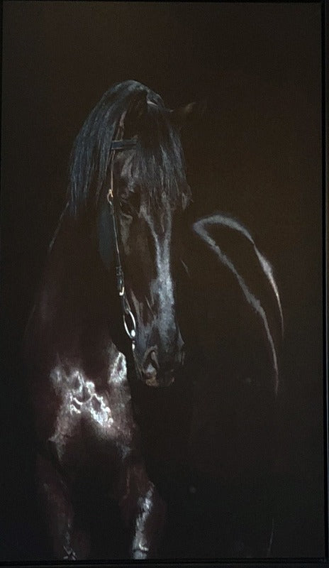 Unknown Painter    Black Stallion