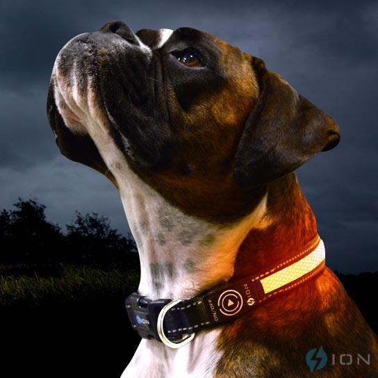 led-collar-orange