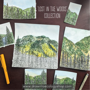 'Lost in the Woods' Original Watercolor + Ink Collection