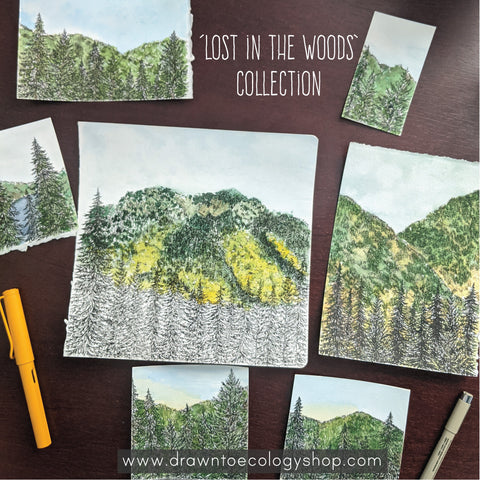 'Lost in the Woods' Original Watercolor and Art Collection, Drawn to Ecology
