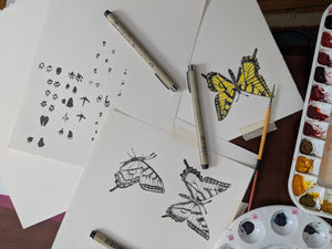 Hand drawn butterflies and animal tracks