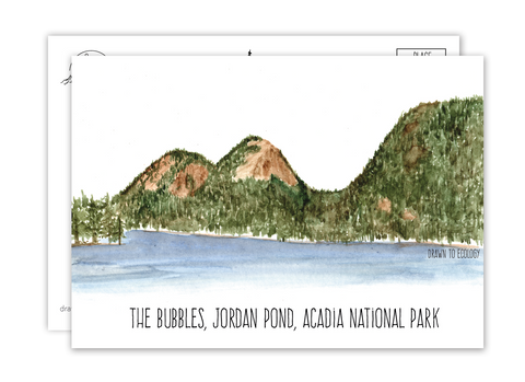 Bubbles Acadia National Park Watercolor Postcard
