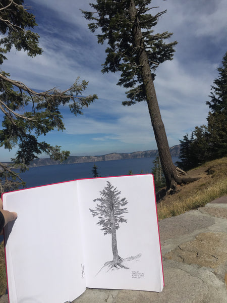 Original Mountain Hemlock Illustration