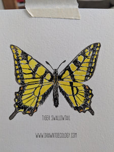 Original Tiger Swallowtail Watercolor Illustration