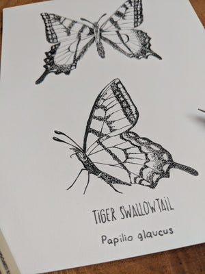 Original Tiger Swallowtail Ink Illustration