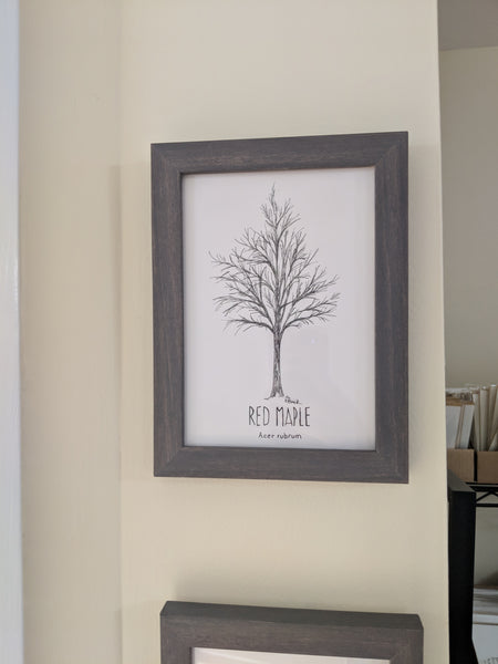 Original Red Maple Tree Illustration