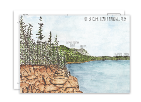 Otter Cliff Acadia National Park Postcard