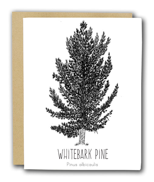 Whitebark Pine Letterpress Card