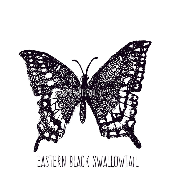 Original Eastern Black Swallowtail Illustration