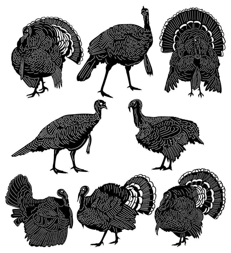 American Wild Turkey Birds-DXF files Cut Ready for CNC-DXFforCNC.com