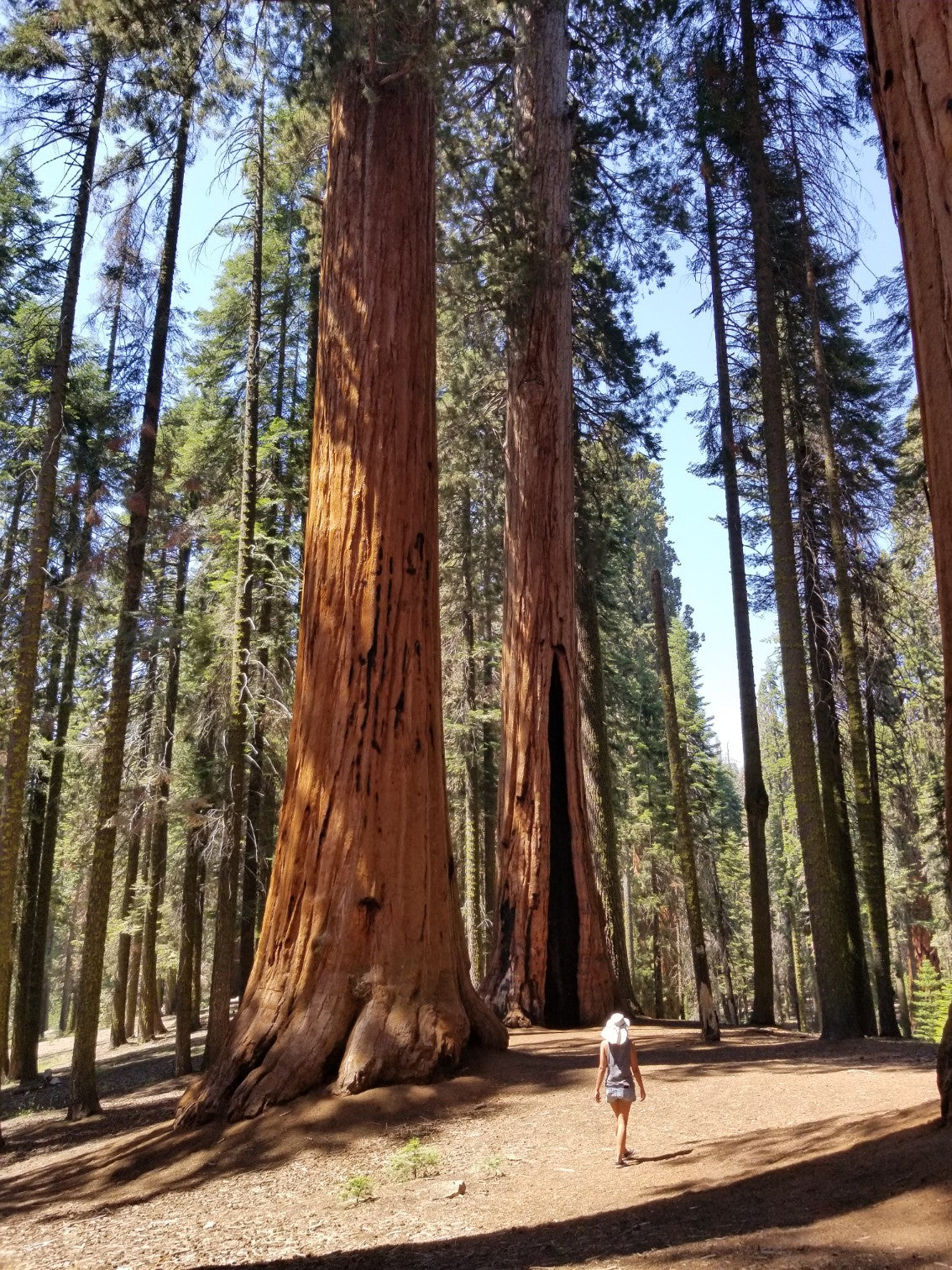 Sequoia Forest, Sequoia National Park