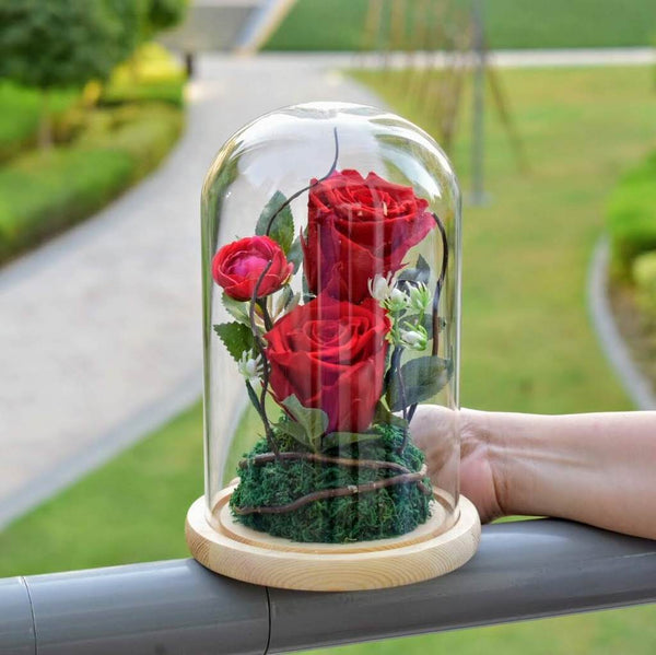 white forever rose in a glass dome