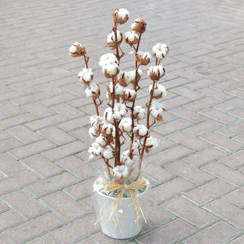 Forever Cotton - Dried Cotton in a Vase -  Flower Gift  by Flower Station Dubai