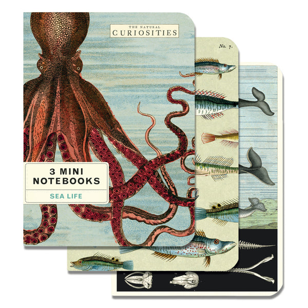 Cavallini & Co. Mini Notebook Sets Sea Life 3/Pkg