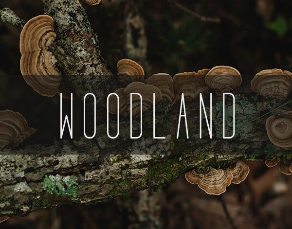 Woodland and Forest Photography