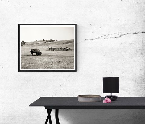 American Bison in the Badlands Black and White Wall Art Print - Many Sizes