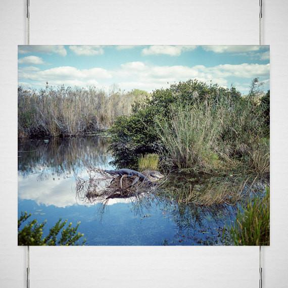 Afternoon in the Wetlands, Wildlife Photography Lost Kat Photography