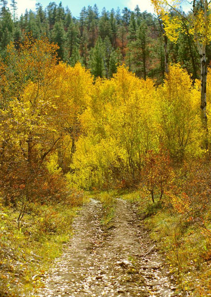 Aspen Trail, Nature Photography Lost Kat Photography