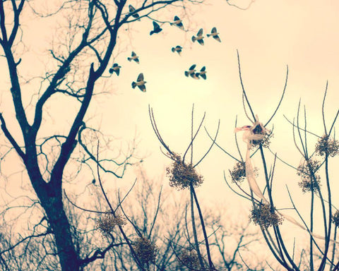 Birds in Flight, Dreamy Fine Art Print Lost Kat Photography