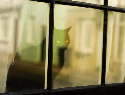 Black Cat Window - British Cats Series Print Lost Kat Photography