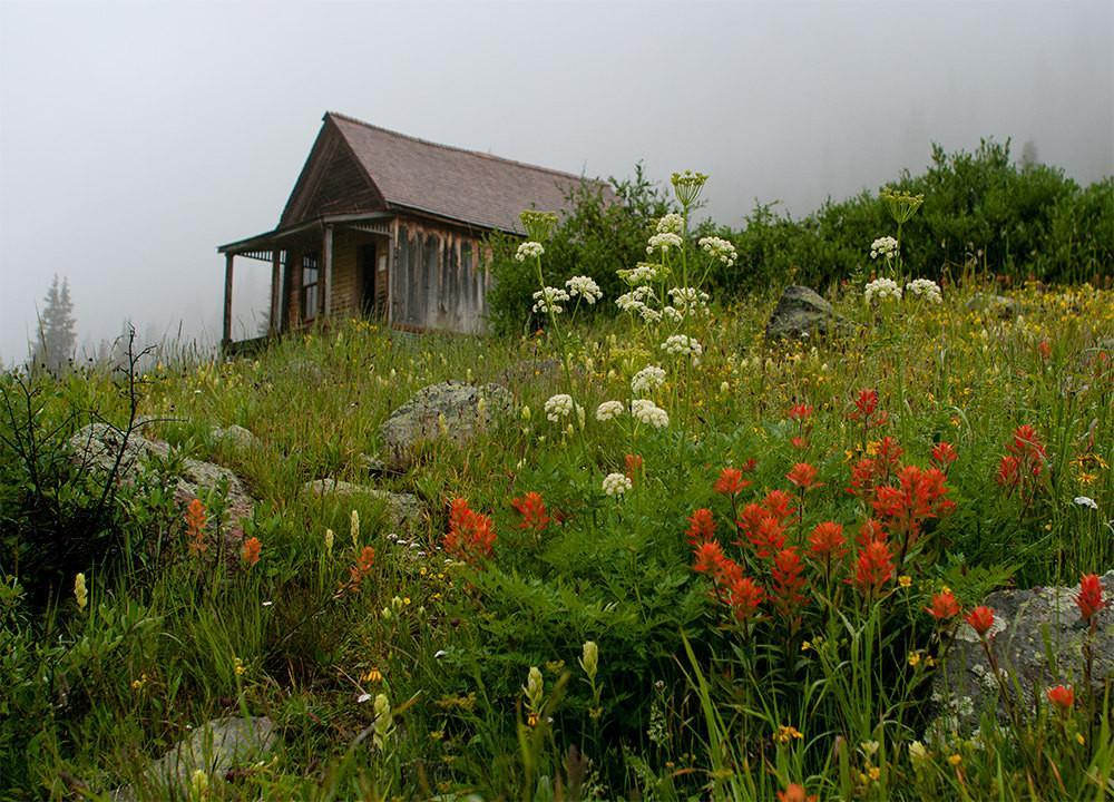 Cabin and Wildflowers, Animas Forks, Colorado Photography Lost Kat Photography