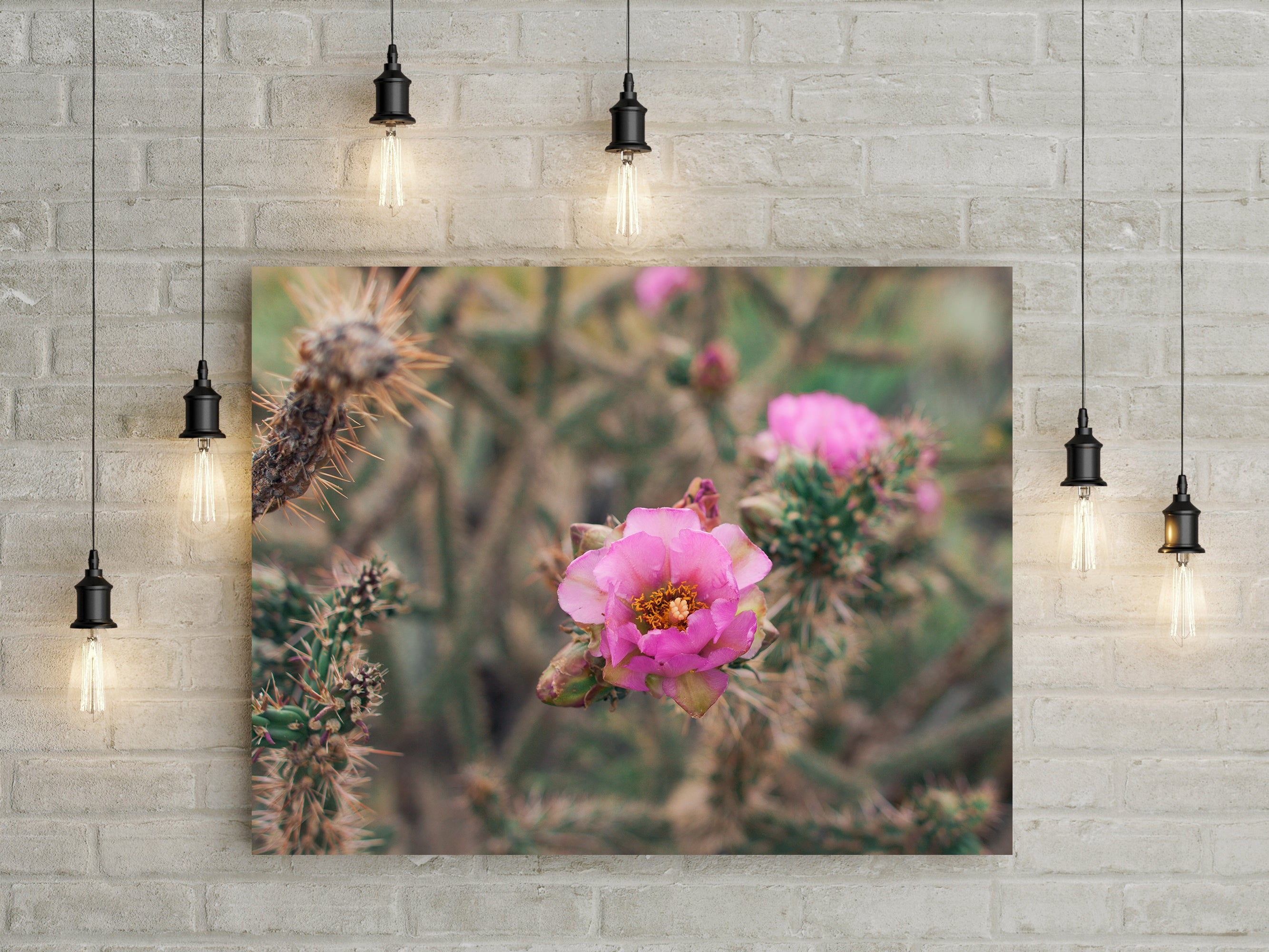 Rose Pink Cactus Bloom Desert Wall Art Print