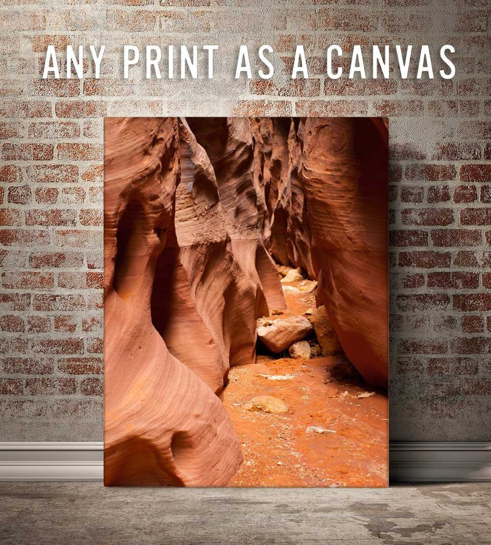 Canvas Print - Any Photo in the Shop as a Gallery Wrap - FREE US SHIPPING! Lost Kat Photography
