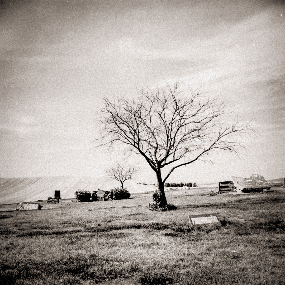 Cemetery and Tree, Grainy Square Film Photography Print