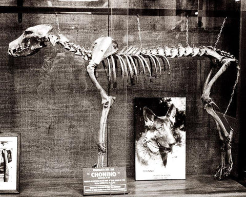 Dog Skeleton, Argentina, Gothic Photography Lost Kat Photography