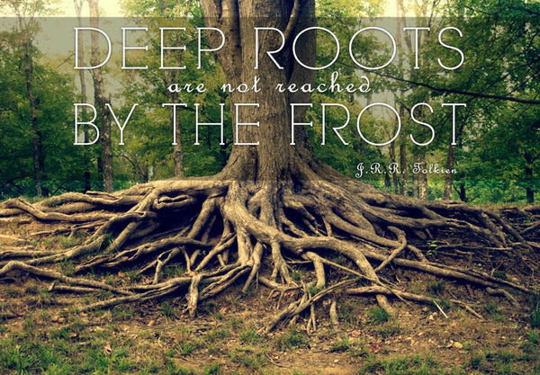 Family Tree Tolkien Quote Poster Print Lost Kat Photography