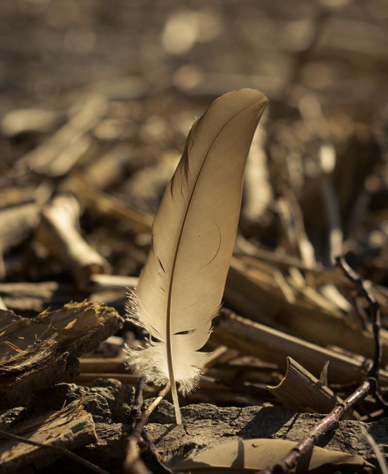 Feather on the Beach, Nature Photography Lost Kat Photography