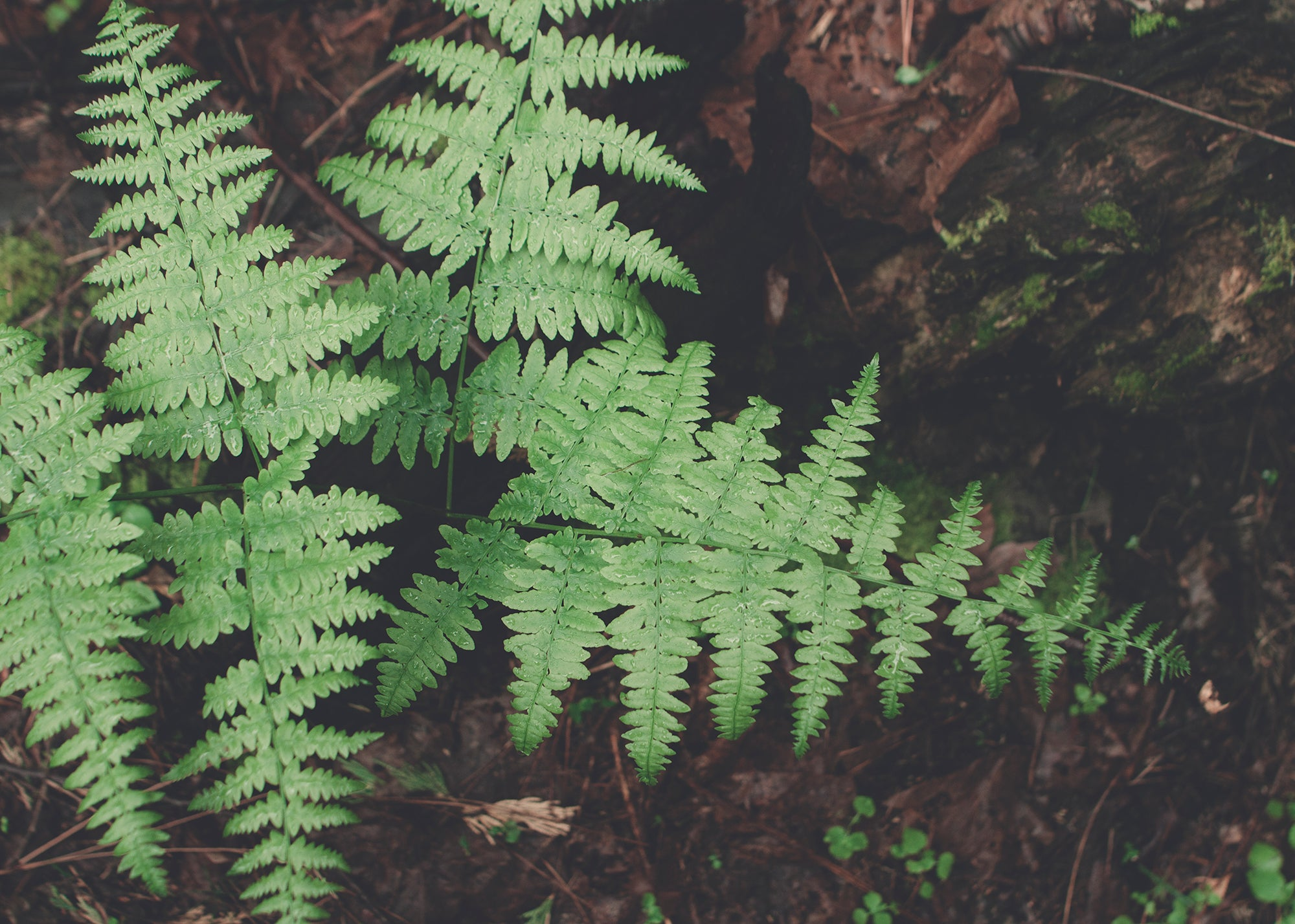 Fern Detail, Yosemite National Park Photo Print