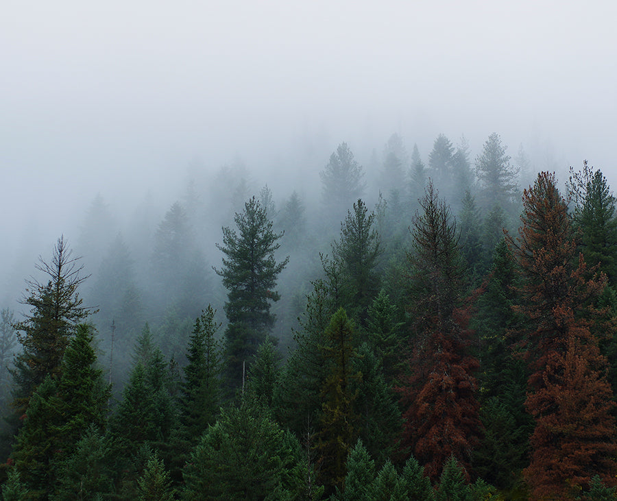 Foggy Forest of Indescribable Awe Fine Art Photo