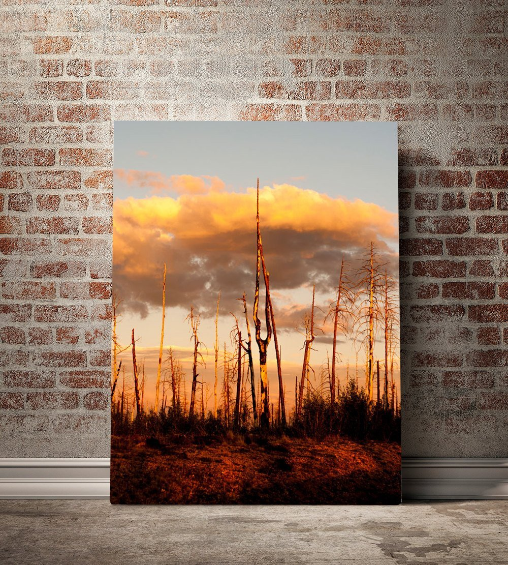 Forest Fire Sunset, Nature Photography - Fine Art Print Lost Kat Photography