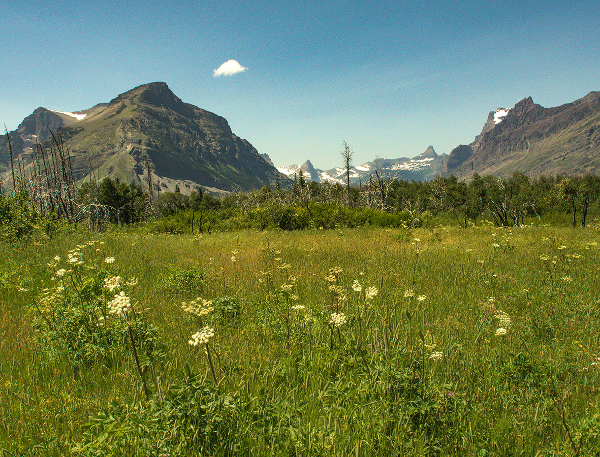 Mountain Meadow - Glacier National Park Photo Print