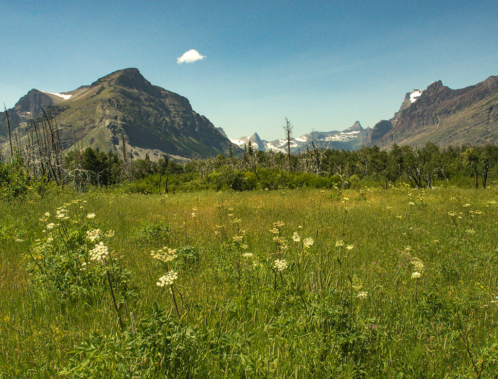 Mountain Meadow - Glacier National Park Nature Photography