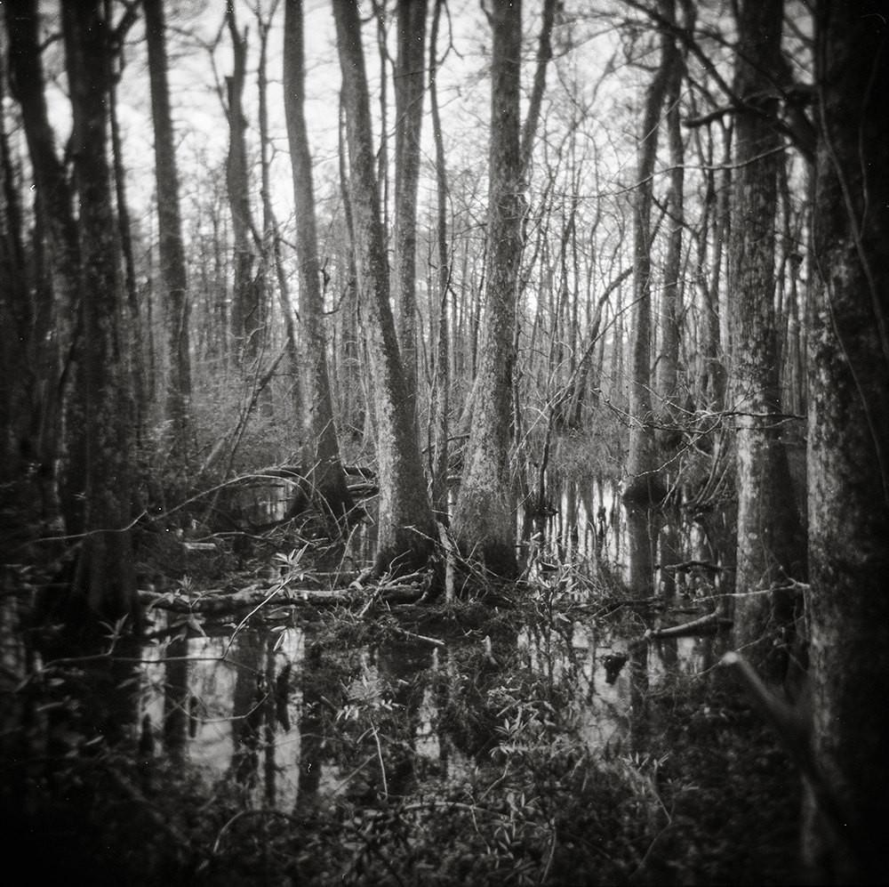 Haunted Swamp, Holga Print Lost Kat Photography
