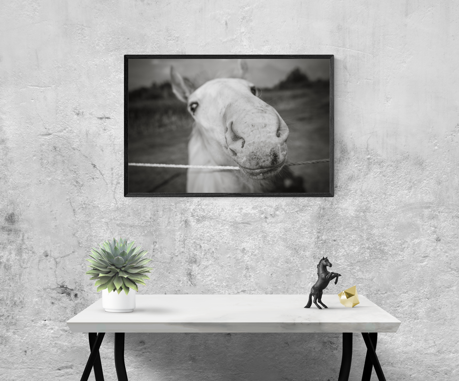 Baby Stallion, Black and White Modern Art Print