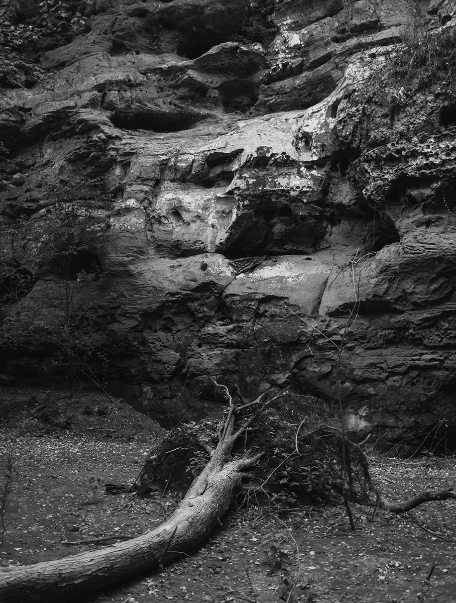 Hear This, Fallen Tree, Ohio Black and White Photo Print