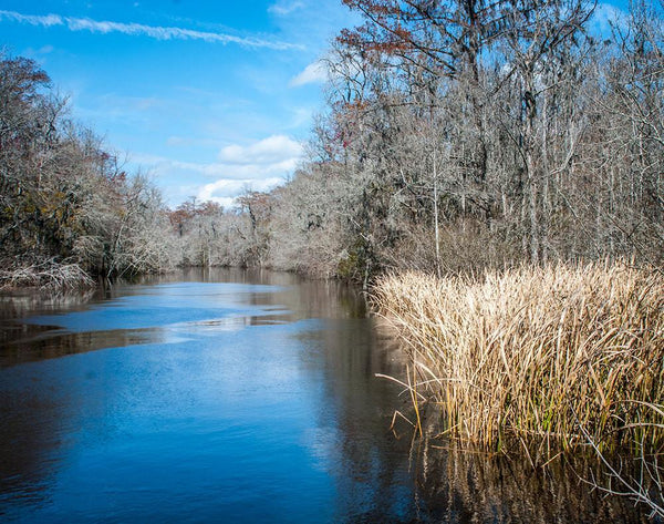 Ogeechee River, Georgia Photography - Fine Art Print Lost Kat Photography