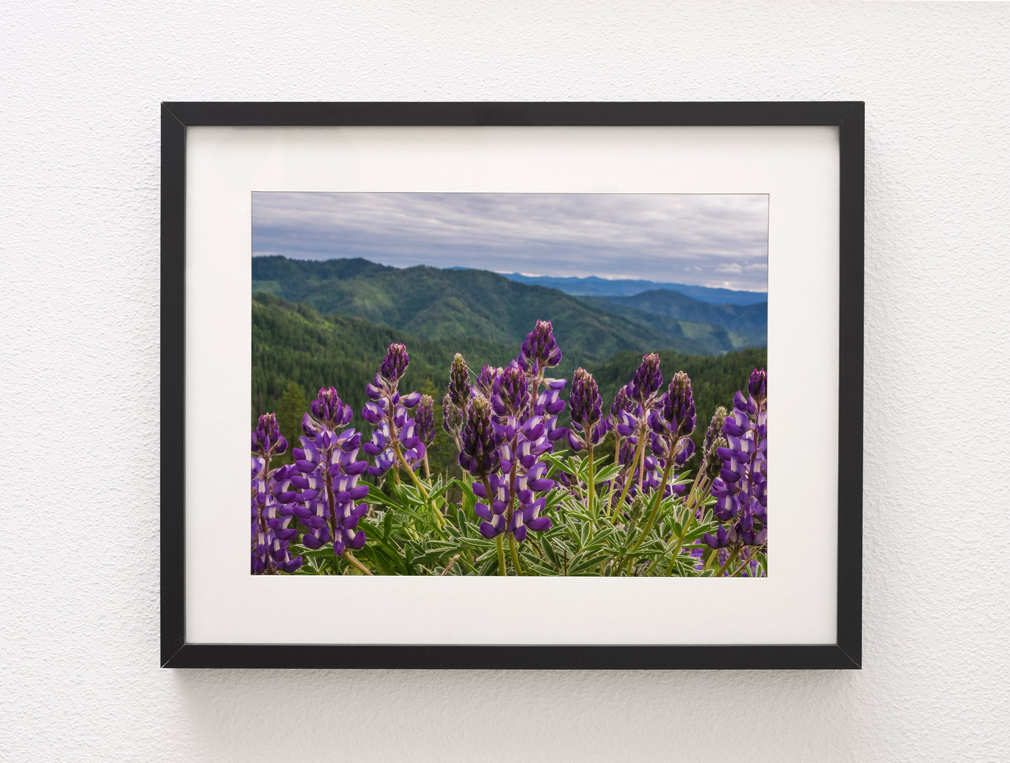 Purple Lupine Wildflowers on a Mountain Pass, Idaho Nature Photography