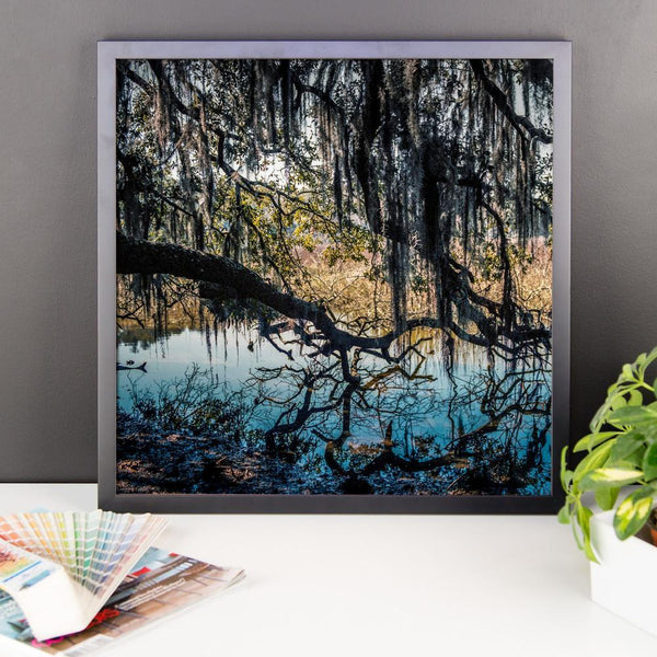 Reaching for Life - Framed Photo Print Lost Kat Photography