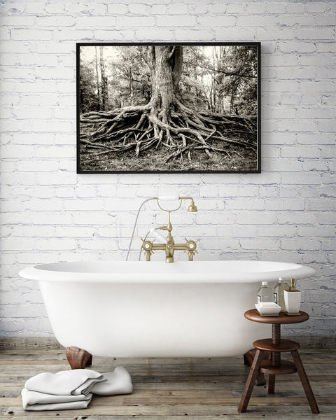 Roots of Life, Black and White Fine Art Print Lost Kat Photography