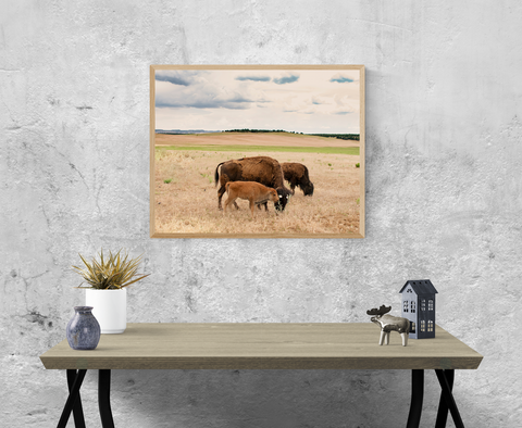 Bison Family, Utah Wildlife Wall Art Print - Many Sizes